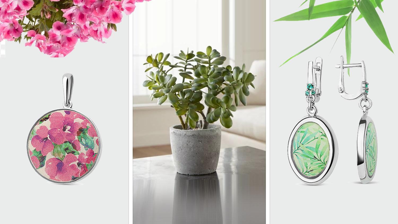Растения богатства по фен шуй